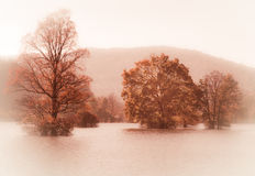 Autumn trees in mist in flood water Stock Photography