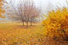 The autumn trees in the mist Royalty Free Stock Photography