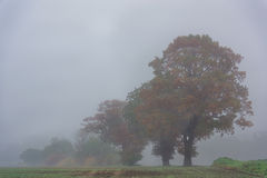 Autumn Trees in Mist Royalty Free Stock Photos