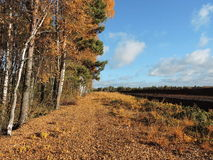 Autumn trees in moor Stock Photos