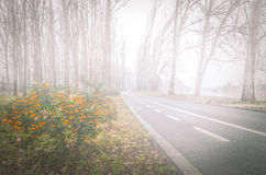 Autumn trees and morning fog. Royalty Free Stock Images