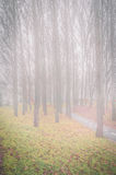 Autumn trees and morning fog. Stock Photos