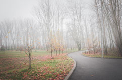 Autumn trees and morning fog. Stock Photo