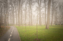 Autumn trees and morning fog. Stock Images