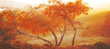 Autumn trees in the morning in the mountains Stock Photo