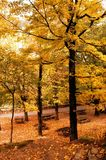 Autumn trees in the National Park of Geres royalty free stock image