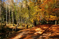 Autumn trees in the National Park of Geres stock photography
