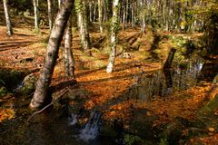 Autumn trees in the National Park of Geres stock image