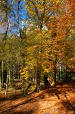 Autumn trees in the National Park of Geres royalty free stock photography