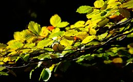 Autumn trees in the National Park of Geres. Portugal royalty free stock images