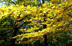 Autumn trees in the National Park of Geres. Portugal royalty free stock photo