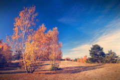 Autumn trees nature background Stock Photography