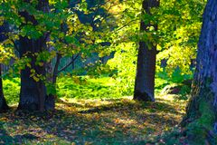 Autumn, trees, nature. High quality large size photo of trees in a park. Image shows really saturated picture: foliage, fallen leaves, some path, etc. Soft and Stock Photography