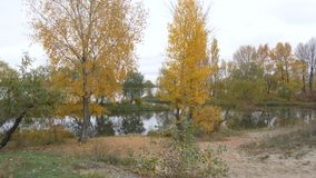 Autumn trees near the river bank. Autumn forest near the river stock video footage