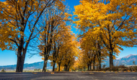 Autumn trees near road. Slovakia stock photography