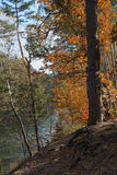 Autumn trees near water Royalty Free Stock Photos
