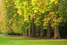 Autumn Trees nel parco di Kensington a Londra immagini stock