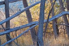 Autumn Trees och filialer arkivbild