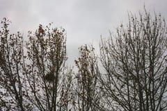 Autumn Trees op een rij Royalty-vrije Stock Afbeeldingen