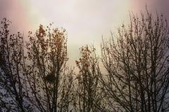 Autumn Trees op een rij bij Gouden Uur Stock Afbeeldingen