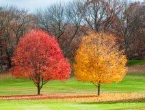 Autumn Trees op Gebied met Kleurrijke Bladeren Stock Afbeeldingen
