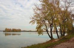 Autumn Trees op Meerkust Royalty-vrije Stock Foto