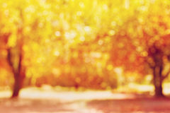 Autumn trees out of focus. Natural bokeh background Royalty Free Stock Photography