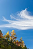 Autumn trees over blue sky Royalty Free Stock Image