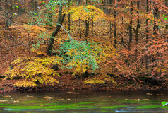 Autumn trees over the river Royalty Free Stock Photo