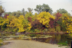 Autumn trees over water pond Royalty Free Stock Photography