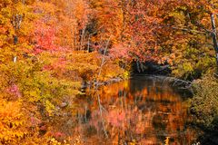 Autumn trees over water stream Royalty Free Stock Images
