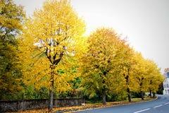 Autumn Trees på vägen Arkivfoton