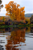 Autumn trees on paddle into gore 2. Fall colors reflecting off the Colorado river Stock Image