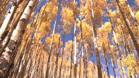 Autumn trees panning. Video of autumn trees panning stock video footage