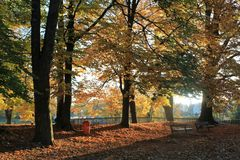 Autumn. Trees in the park in autumn Royalty Free Stock Photos