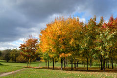 Autumn trees in park Royalty Free Stock Image