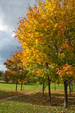 Autumn trees in park. Autumn maple trees in park stock photography