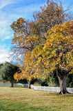 Autumn trees in a park Royalty Free Stock Images