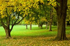 Autumn trees in park. Yellow leaves falling from trees in park in Autumn (Hamilton, Ontario, Canada Royalty Free Stock Image