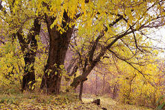 Autumn trees in park Royalty Free Stock Images