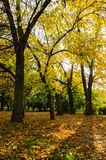 Autumn trees in the park Royalty Free Stock Photos
