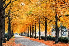 Autumn trees. In park alley Stock Images