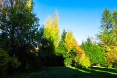 Autumn trees in the park. Landscape nature green sky beautiful season background grass forest yellow environment color natural outdoor blue leaf view foliage royalty free stock photo