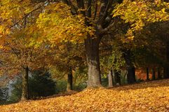 Autumn trees in the park. Leaves on the ground stock images