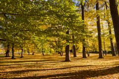 Autumn / Trees in a park. Autumn / Trees in a beautiful park royalty free stock photo