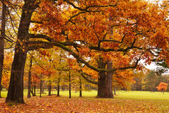 Autumn trees in park Stock Photos