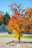 Autumn trees in the park Stock Images