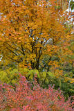 Autumn trees in park. Colorful autumn trees in the large park of the town Calarasi stock photography