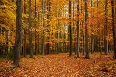 Autumn trees in park Stock Photos