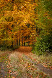 Autumn trees in park Royalty Free Stock Photography